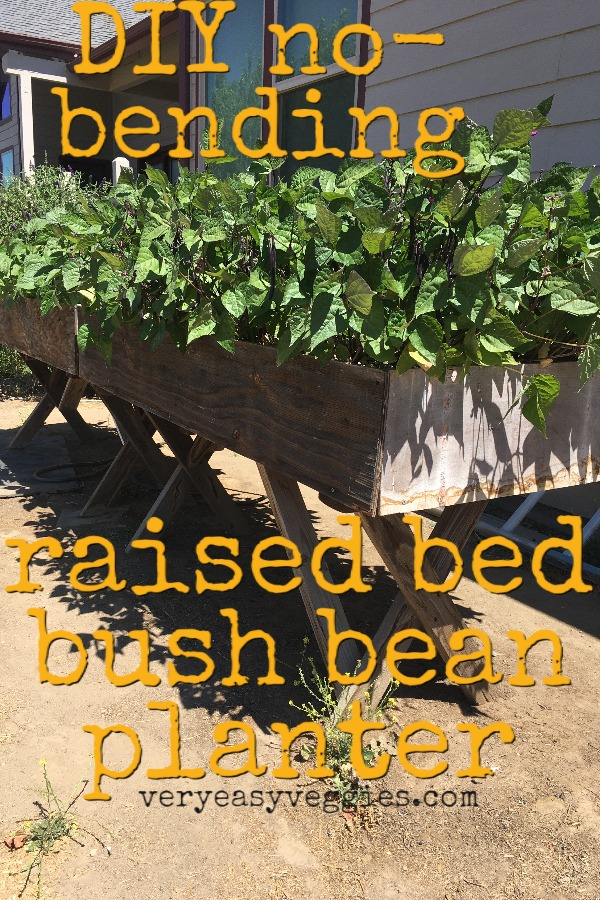 tabletop raised bed bean planter DIY