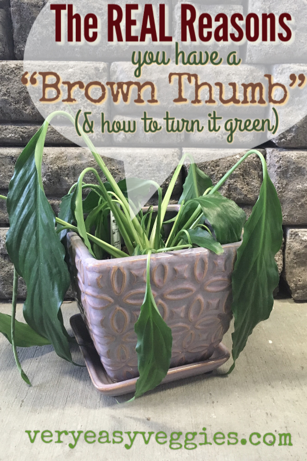 The real reasons you have a brown thumb, and how to fix a black thumb!