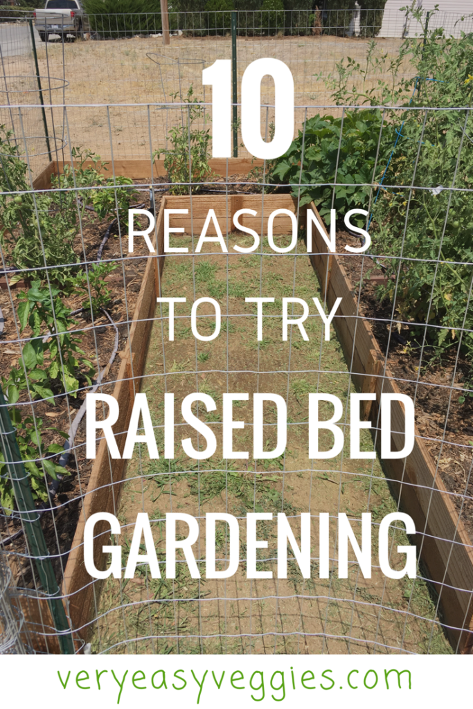 Want to learn how to grow your own vegetables? Or think you have a brown thumb from trying other methods? Find out why raised beds are the perfect method for gardening for beginners!