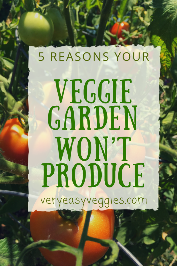 Find out five common problems for beginner gardeners that end up with little or no veggies.  Troubleshooting vegetable gardening for beginners!