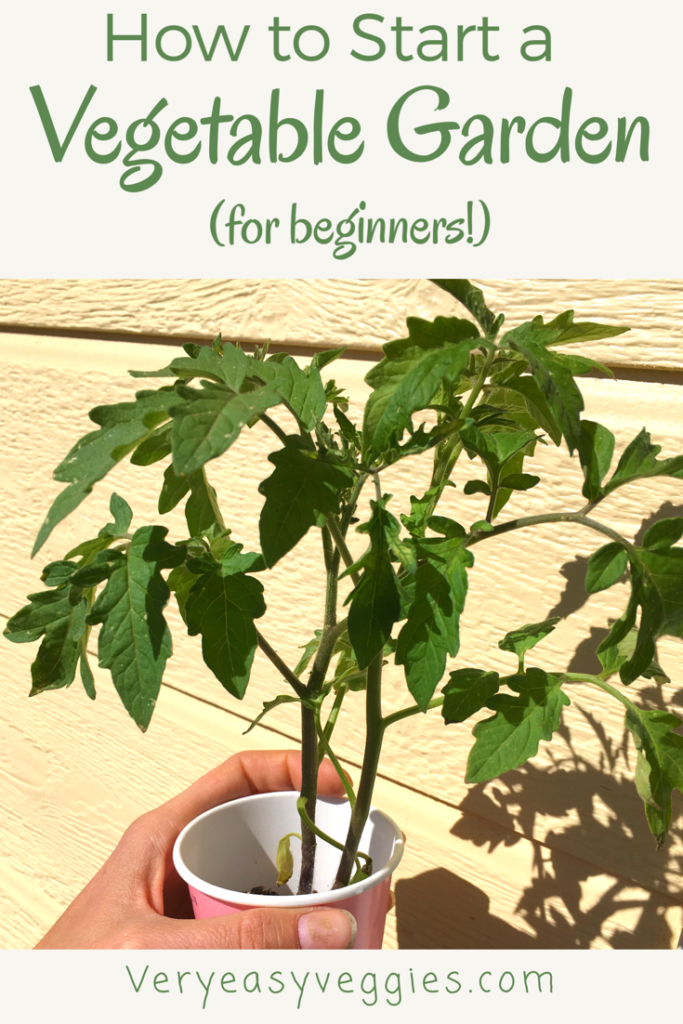 Learn how to start a garden and grow your own veggies! Find out all you need to know about vegetable gardening for beginners! If you're a beginner gardener, this page is just for you.